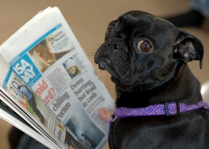 dog-puppy-newspaper-flickr-steve-eng